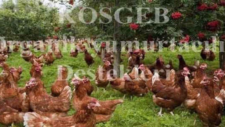 Organik Yumurta Tavukçuluğu Kredisi Nasıl Alınır ?