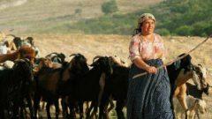 Kadın girişimci çiftçilere en iyi hayvan kredisi veren 7 banka