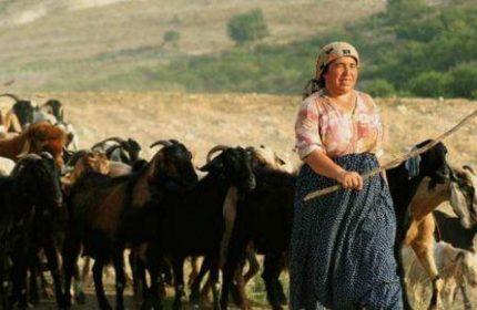 Kadın Girişimci Çiftçilere En İyi Hayvan Kredisi Veren 7 Banka