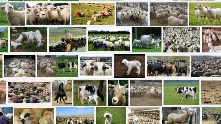 Geri Ödemesiz Hayvan Kredisi Nasıl Alınır 200.000 TL