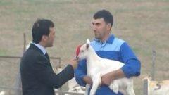 Saanen Keçi Çiftliği Kredisi Nasıl Alınır ? 5.00.000 Lira