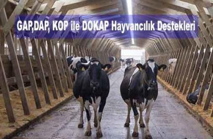 GAP,DAP, KOP ile DOKAP Hayvancılık Destekleri (Projeler)