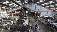 GAP,DAP, KOP ile DOKAP Hayvancılık Destekleri 2019 Başvuruları