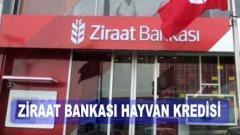 Ziraat Bankası Hayvancılık Kredisi (2021 Destekleri)