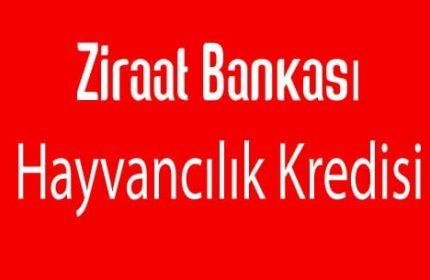 Ziraat Bankası Hayvancılık Kredisi 2019 Hemen 100.000 TL