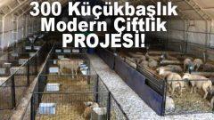 200 300 Başlık Koyun Keçi Ahır Projesi Maliyeti Ölçüleri