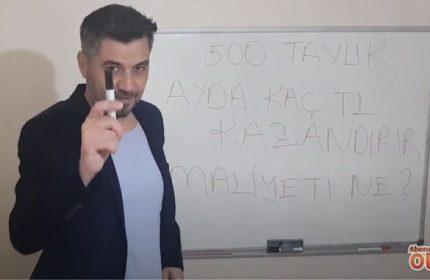 500 Gezer Tavukla Aylık Kaç Lira Para Kazanırsınız? (Kar Marjı Hesaplama)