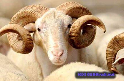 Ziraat Bankası Hayvan Kredilerinde İndirimli İller Bölgeler